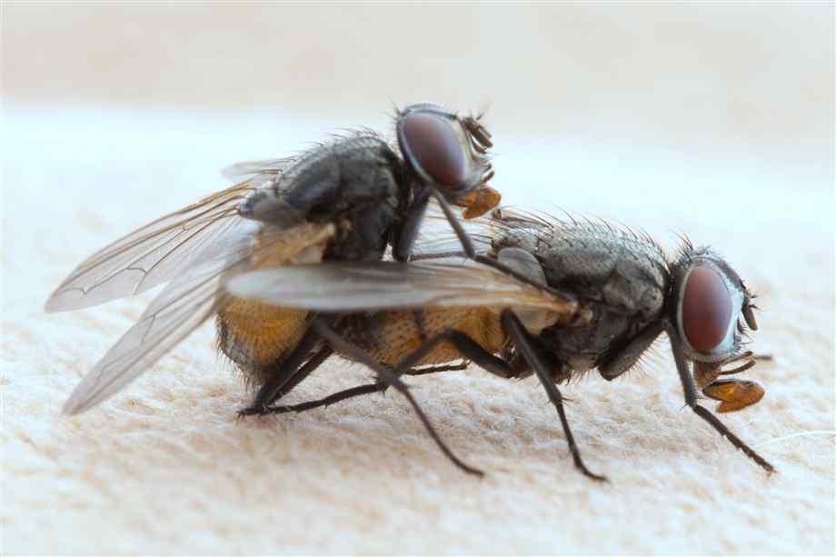 Pesadilla con moscas